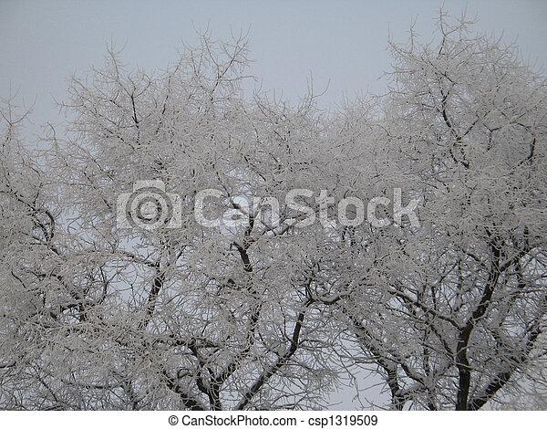 árvores inverno - csp1319509