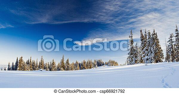 árvores inverno - csp66921792