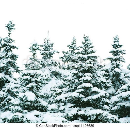 árvores inverno - csp11496689