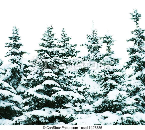 árvores inverno - csp11497885