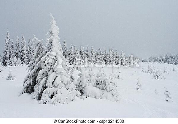 árvores inverno - csp13214580