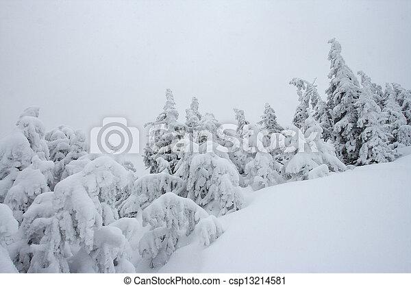 árvores inverno - csp13214581