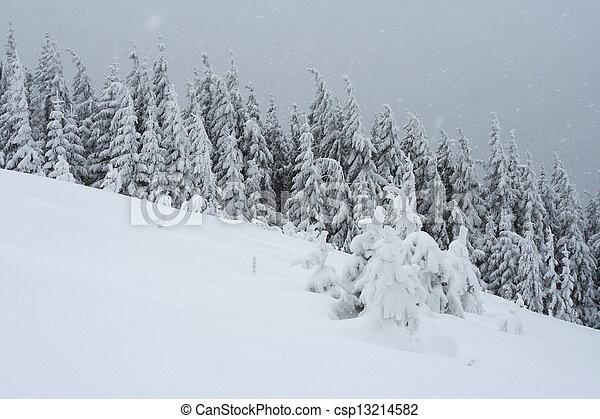 árvores inverno - csp13214582