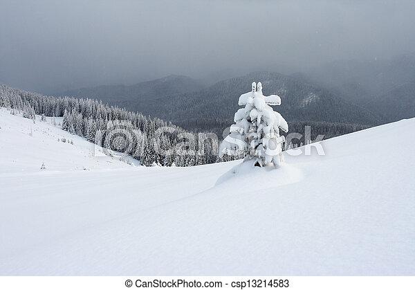 árvores inverno - csp13214583