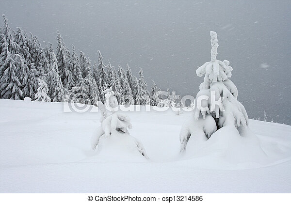 árvores inverno - csp13214586