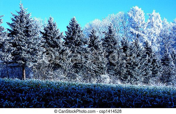 árvores inverno - csp1414528