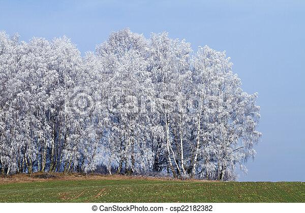 árvores inverno - csp22182382