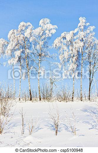 árvores inverno - csp5100948