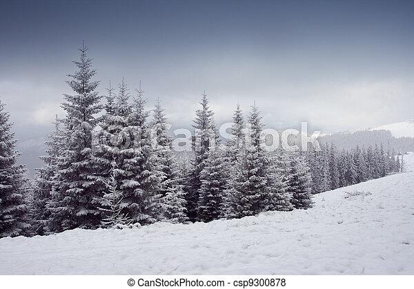 árvores inverno - csp9300878