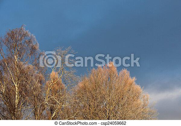 árvores inverno, gelado - csp24059662