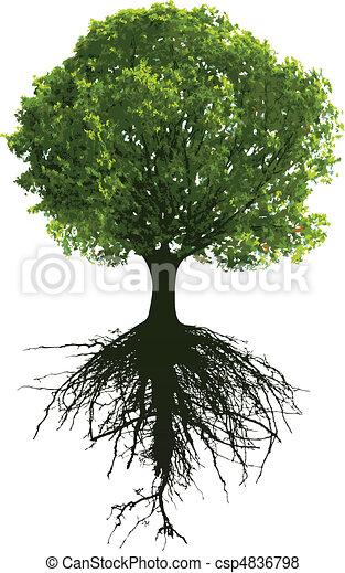 árvores, raizes - csp4836798