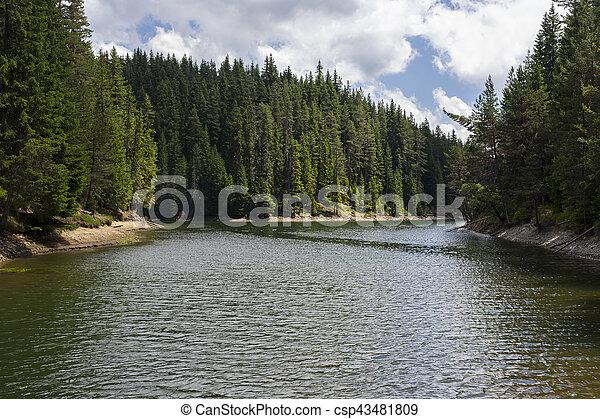 árvores., ventoso, lago, pinho - csp43481809