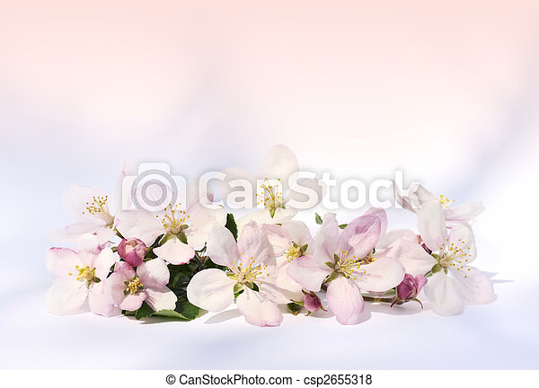 äpple, blomstringar - csp2655318