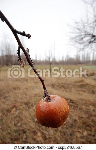 äpple - csp52468567