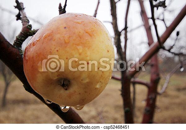 äpple - csp52468451