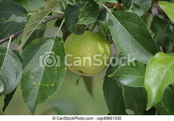 äpple - csp49661330