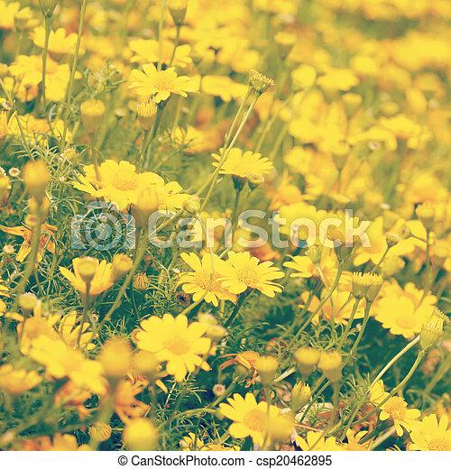 årgång, stil, blomma, gammal, retro - csp20462895