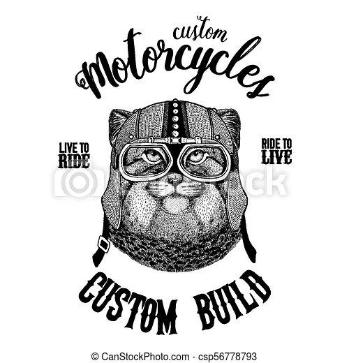 écusson, manul, emblème, tatouage, motard, t-shirt, chat, pièce, motocyclette, animal., sauvage, dessiné, main, image, logo - csp56778793