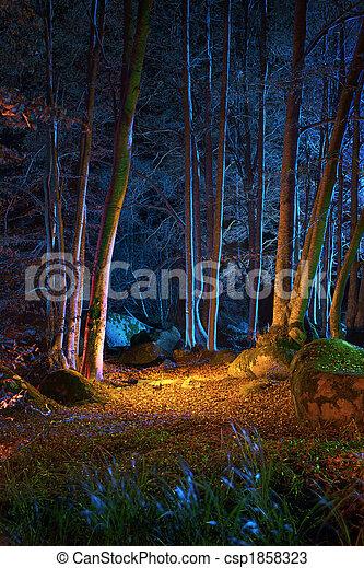 éjszaka, erdő, varázslatos - csp1858323