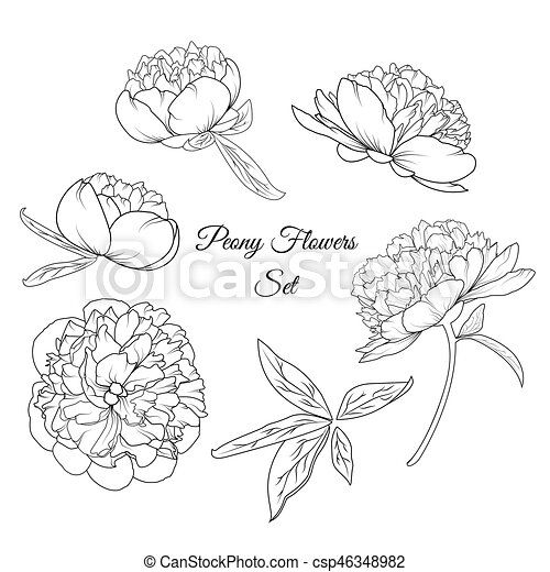 l ments pivoine rose ensemble gabarit fleurs vecteur search clip art illustration. Black Bedroom Furniture Sets. Home Design Ideas