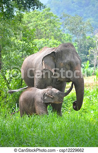éléphant, asie, sud-est, forêt, mère, bébé - csp12229662