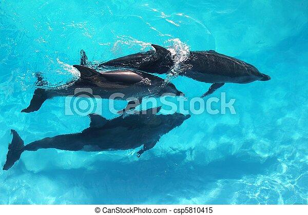 élevé, turquoise, angle, trois, eau, vue, dauphins - csp5810415