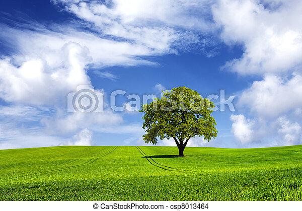énergie, vert - csp8013464