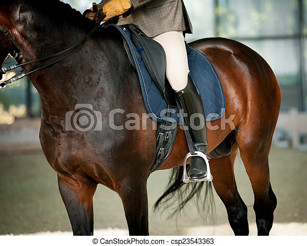 équitation, cheval - csp23543363