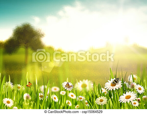 été, beauté naturelle, arrière-plans, afternoon., clair, camomille, fleurs - csp15064529