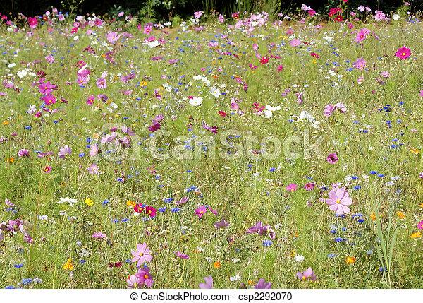 été, fleur, champ - csp2292070