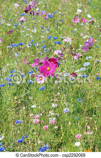 été, fleur, champ - csp2292069