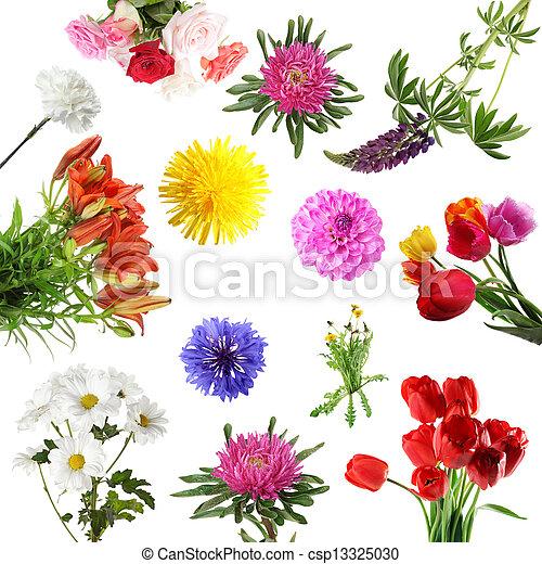 été, fleurs, collections - csp13325030