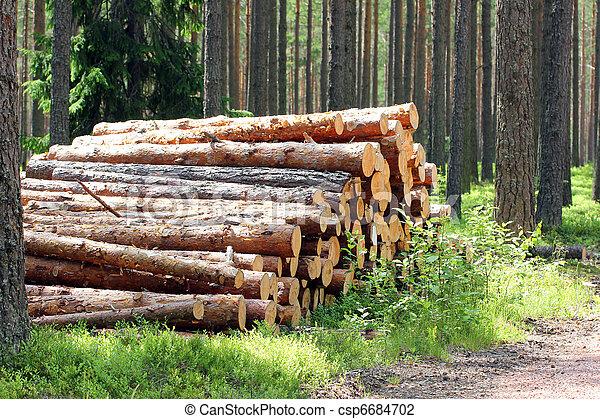 été, journaux bord, lumière soleil, forêt, pin, pile - csp6684702