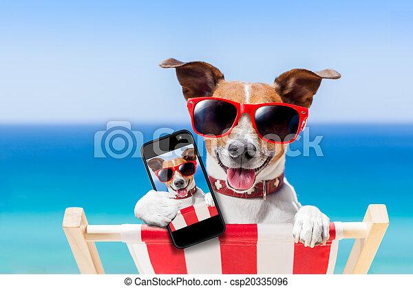 été, selfie, chien - csp20335096