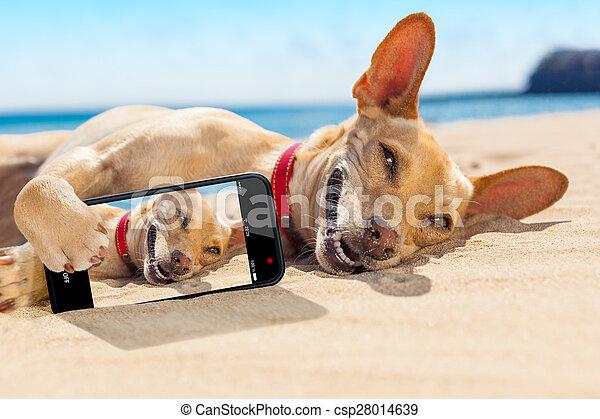 été, selfie, chien - csp28014639
