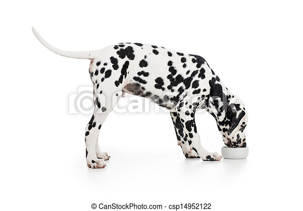 étkezési, tál, kutya, elszigetelt, fehér, dalmáciai, szegély kilátás - csp14952122