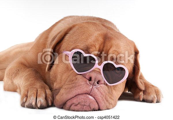 Óculos de sol, cão. Cor-de-rosa, coração amoldou, formulou, filhote ... 7c54afb3c2