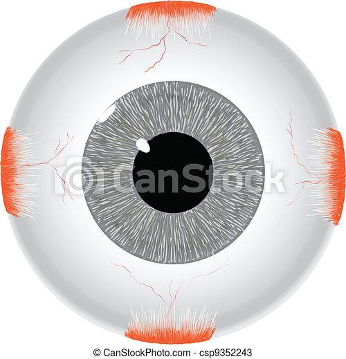 ögon, mänsklig - csp9352243