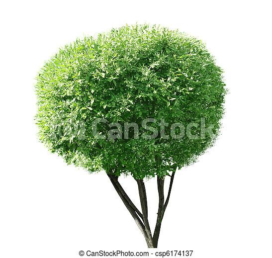 único, árvore - csp6174137