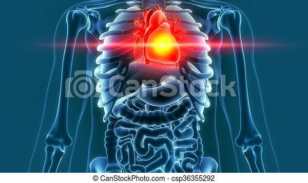 Übertragung, 3d, schmerz, menschliches herz. Herz, schmerz, organ ...