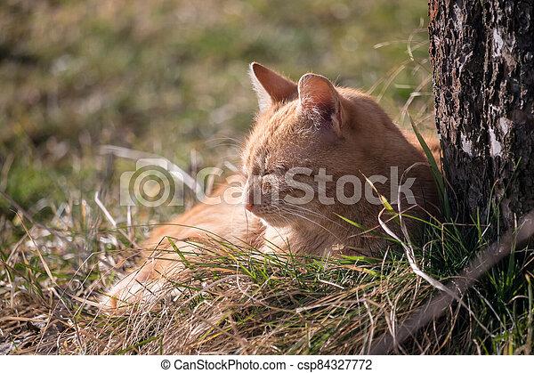 červeň, kočka, lies, pastvina, strom, ostatní - csp84327772