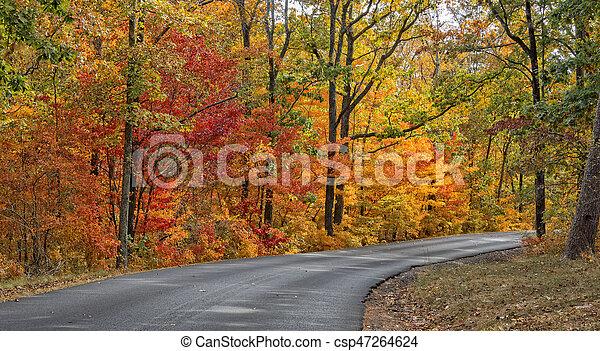 ősz, állam, desoto, liget, befest - csp47264624