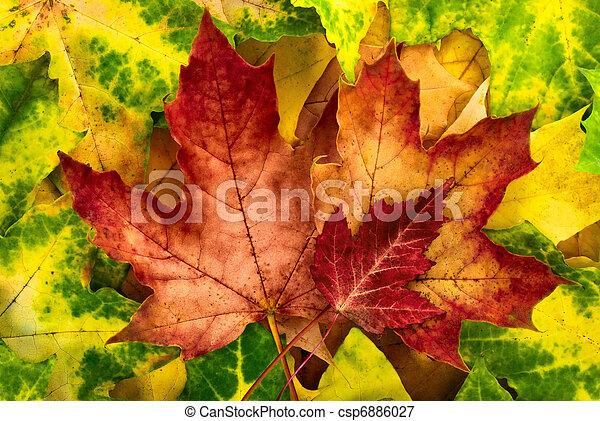 ősz kilépő, élénk, egyezség - csp6886027