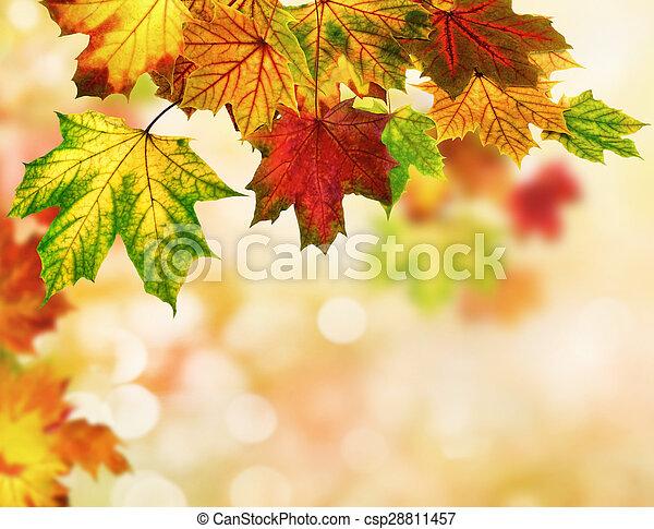 ősz kilépő, bokeh, háttér - csp28811457