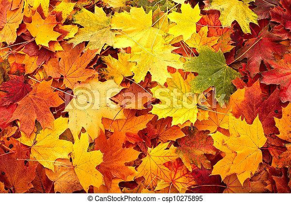 ősz kilépő, csoport, háttér - csp10275895