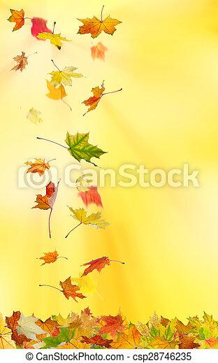 ősz kilépő, juharfa - csp28746235