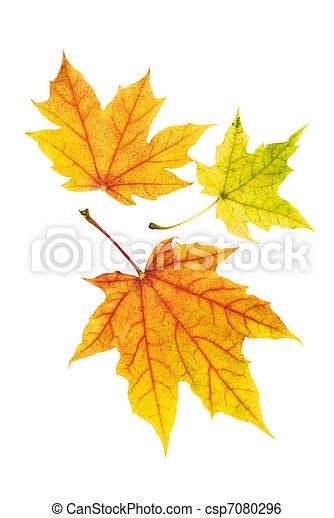 ősz kilépő, rendes, színes - csp7080296