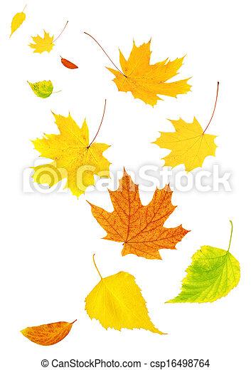ősz kilépő, repülés - csp16498764