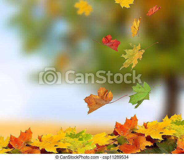 ősz kilépő - csp11289534