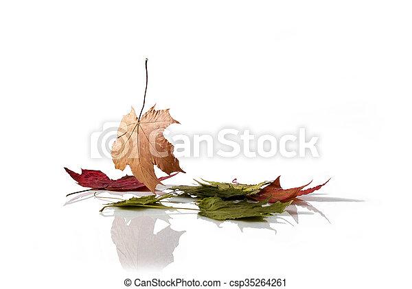 ősz kilépő - csp35264261